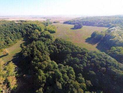Martuk forest